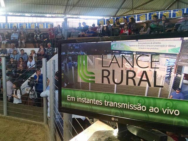 Lance Rural cresce como opção segura de negócios em 2016