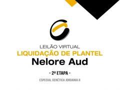 Leilão Virtual Liquidação de Plantel Nelore AUD – 2ª Etapa