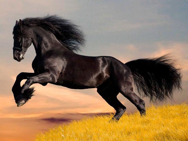 Aos apaixonados por cavalo: conheça alguns dos equinos mais bonitos do mundo