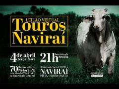 Leilão Virtual Touros Naviraí