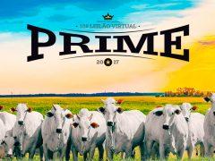 10º Leilão Virtual Prime