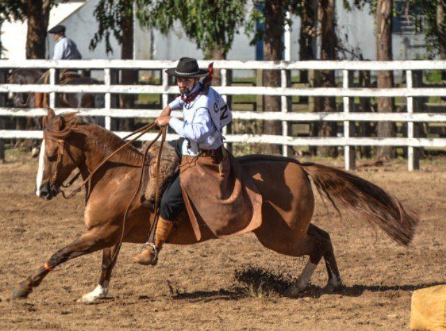 Cavalos crioulos dão show de morfologia em leilão da Cabanha Rio Bonito