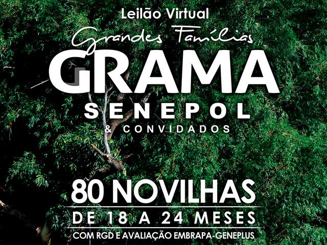 Leilão Virtual Safiras do Senepol Grama & Convidados