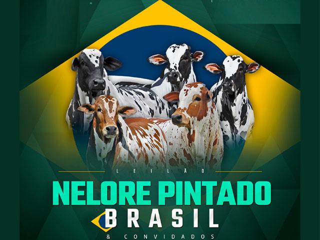 Leilão Nelore Pintado Brasil & Convidados