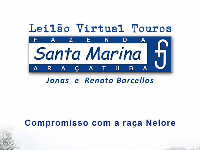 Leilão Virtual Touros Santa Marina