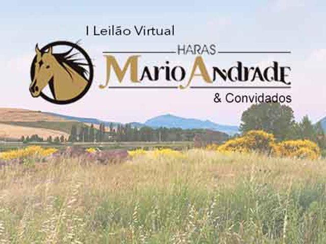 I Leilão Virtual Haras Mario Andrade, Haras Bela Vida & Haras Tangará