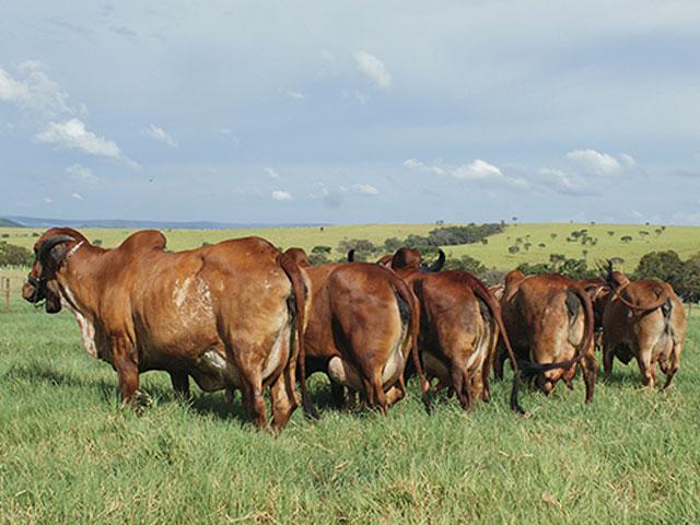Villefort oferta reprodutores de leite A2A2
