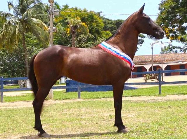 Rancho Verão Vermelho oferta campeões da raça Mangalarga Mar