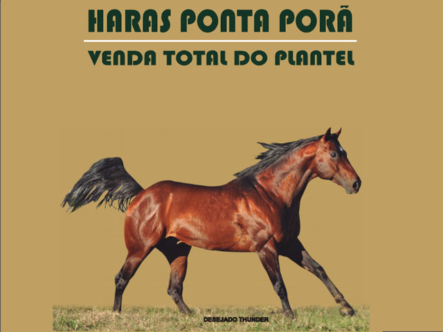 Leilão Virtual Haras Ponta Porã