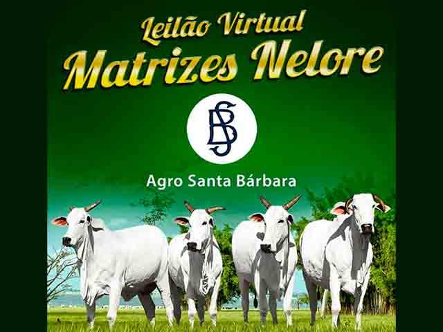 Leilão Virtual Matrizes Nelore Agro Santa Bárbara