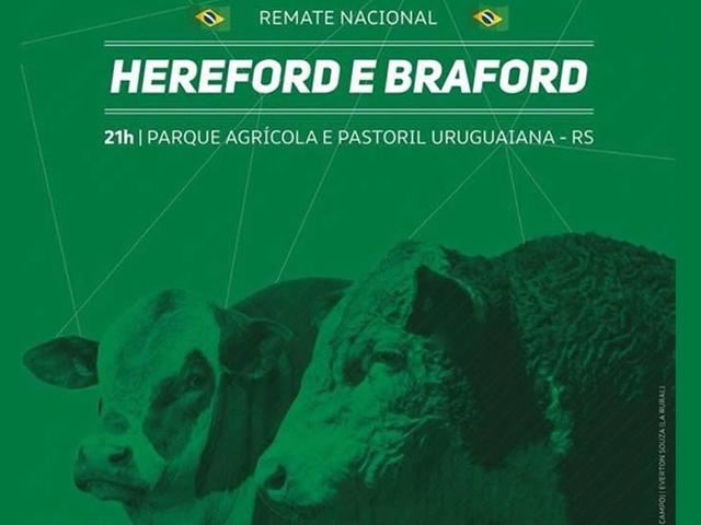 Nacional Hereford e Braford oferta qualidade e pioneirismo