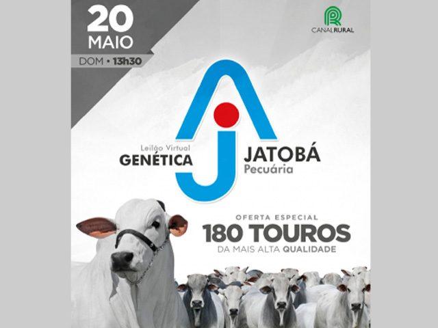 Leilão Virtual Genética Jatobá