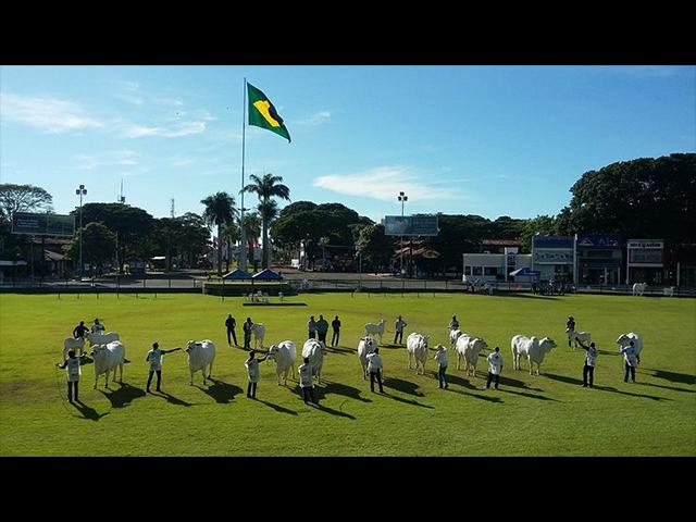 Canal Rural escala seleção para a Copa do Mundo do Zebu