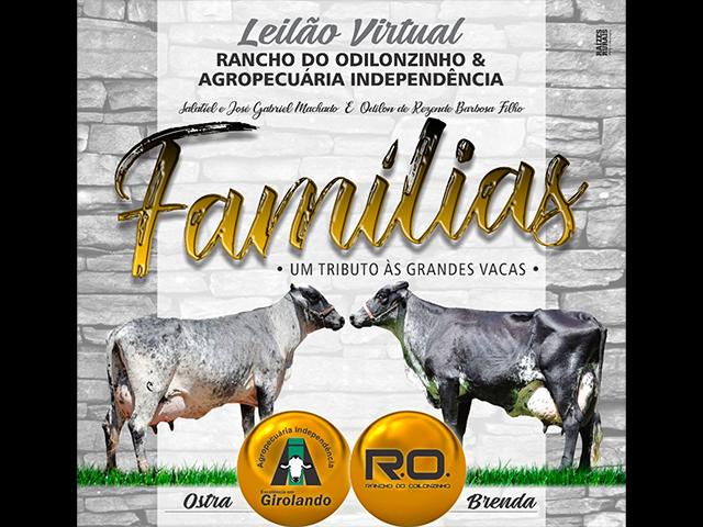 Leilão Virtual Girolando Rancho do Odilonzinho e Fazenda Independência