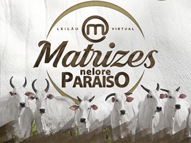 Leilão Virtual Matrizes Nelore Paraíso