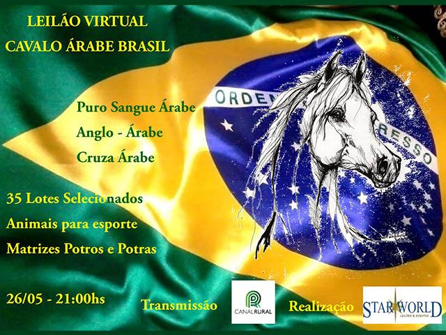Leilão Virtual Cavalo Árabe