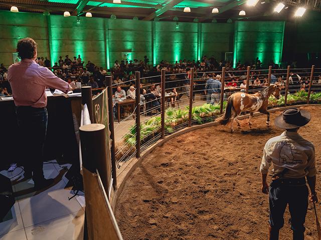 Leilões apresentam estabilidade no mercado da raça Crioula