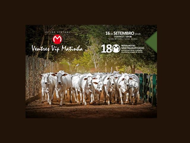 Leilão Virtual Ventre VIP Matinha