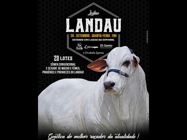 Leilão Landau – Sêmen/ Prenhezes e Progênie