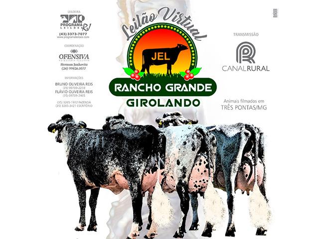 Leilão Virtual Rancho Grande Girolando