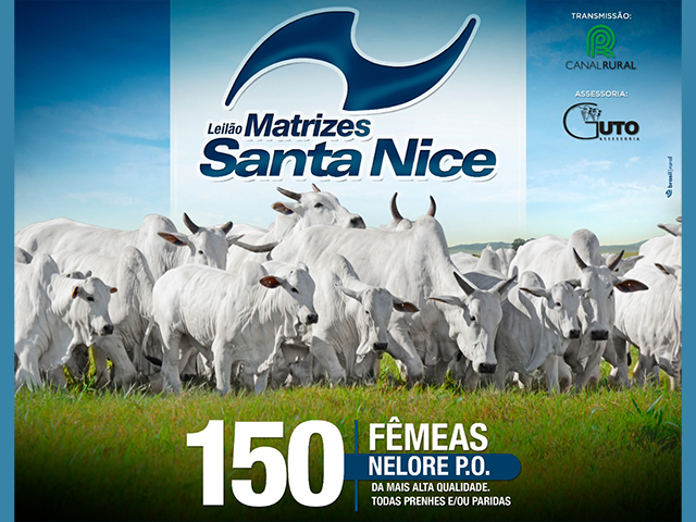 Leilão Virtual Matrizes Santa Nice