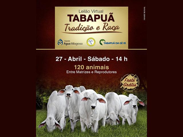 Leilão Virtual Tabapuã Tradição e Raça