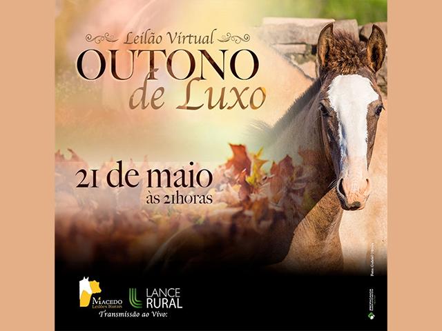 Leilão Virtual Outono de Luxo