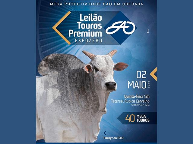 Leilão Touros Premium – Expozebu