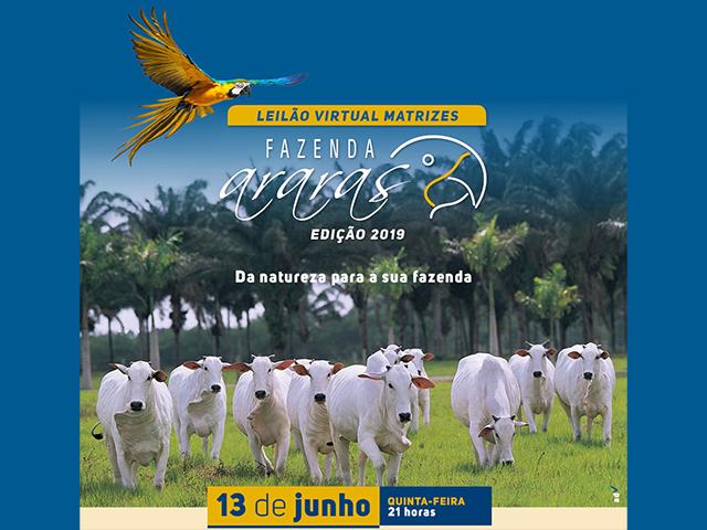 Leilão Virtual Matrizes Fazenda Araras – Edição 2019