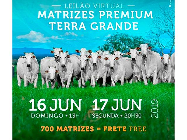 Leilão Virtual Matrizes Premium Terra Grande
