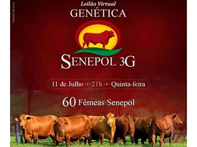 Leilão Virtual Genética Senepol 3G