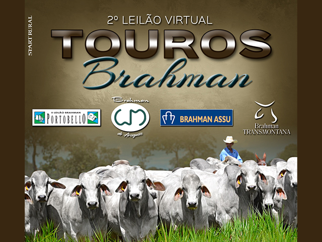 2º Leilão Virtual Touros Brahman