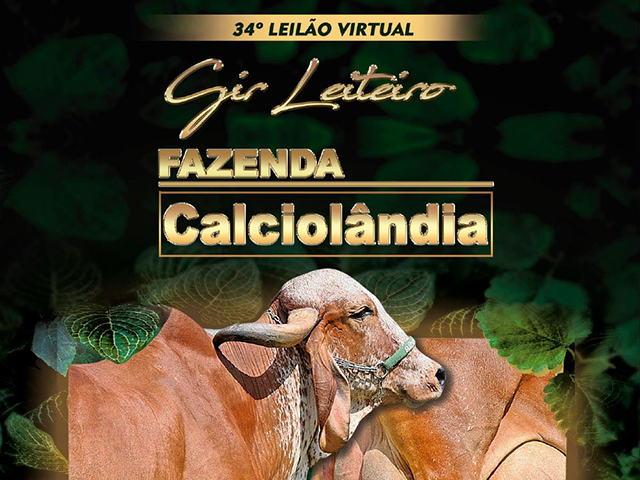 Leilão Virtual Gir Leiteiro Calciolândia
