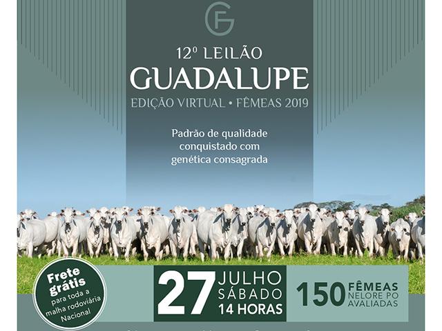 Leilão Virtual Matrizes Guadalupe