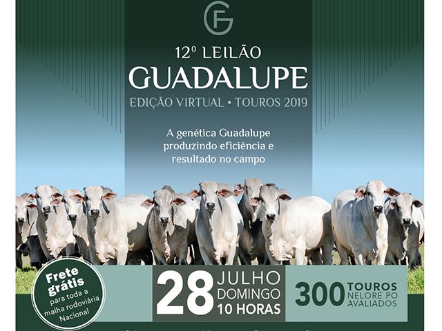 Leilão Virtual Touros Guadalupe