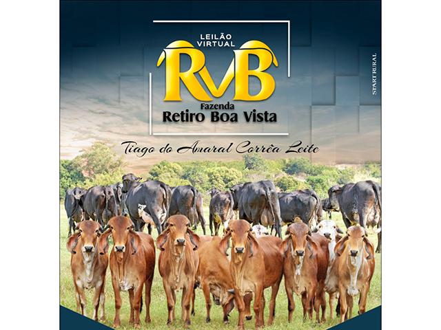 Leilão Virtual Girolando RBV