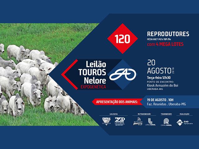 Leilão Touros EAO