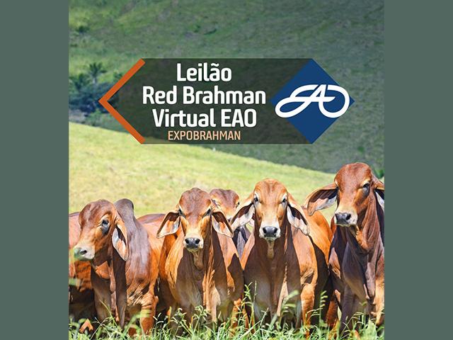 Leilão Virtual EAO Red Brahman