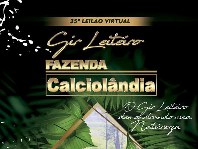 35° Leilão Virtual Gir Leiteiro Fazenda Calciolândia