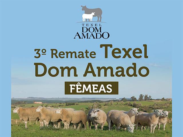 3º Remate Texel Dom Amado – Fêmeas