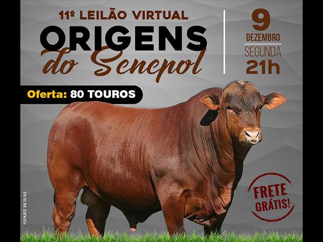 11º Leilão Virtual Origens do Senepol