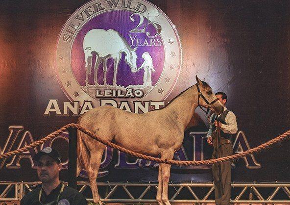Leilão Ana Dantas Ranch movimenta quase R$ 2,7 mi