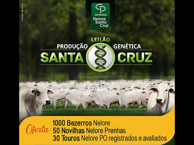 AO VIVO: Leilão Produção Genética Santa Cruz