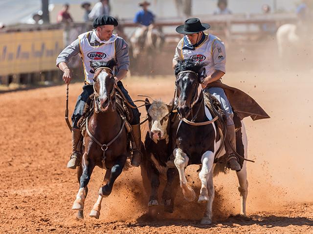 Ginetes mantêm ritmos de treino para retorno de ciclo do cavalo crioulo