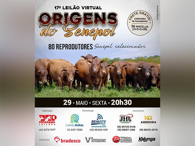 Origens do Senepol oferta 80 reprodutores selecionados