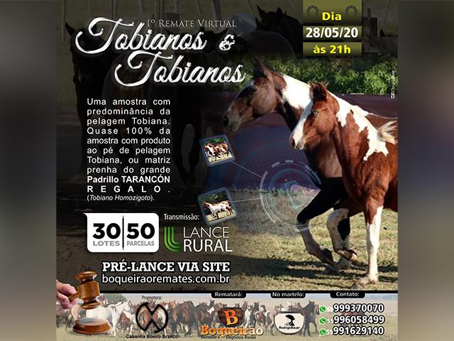 Boqueirão Remates organiza leilão exclusivo de cavalos tobianos