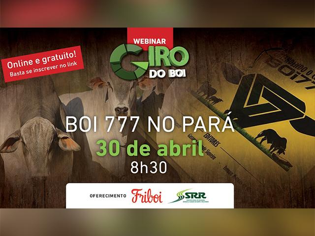 Webinar comenta os desafios de recria e terminação do Boi 777 no Pará