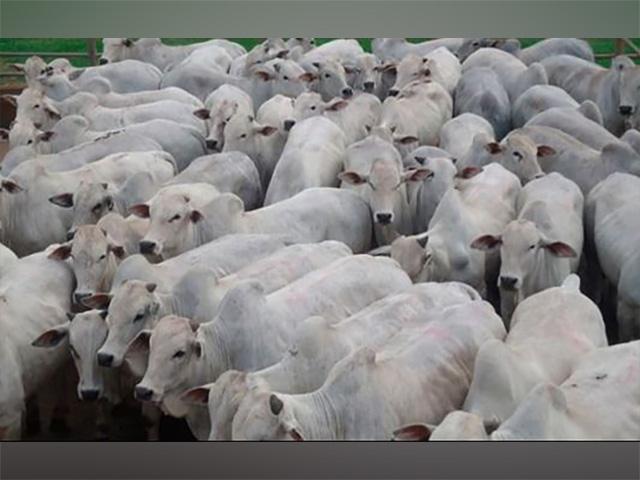 Mercado da carne bovina: Para onde vamos?