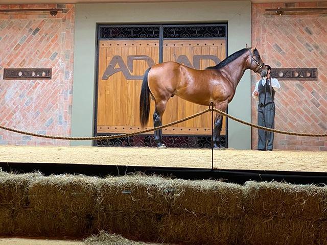 Xlll Leilão Ana Dantas Ranch Velocidade atinge 100% de liquidez