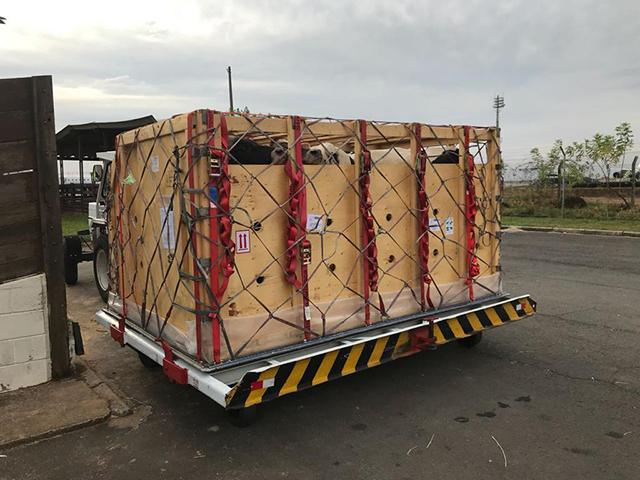 Select Sires do Brasil realiza terceira importação de touros Aberdeen Angus